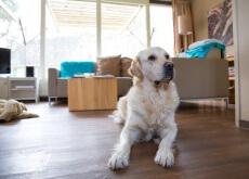 Como manter a casa limpa tendo um cão