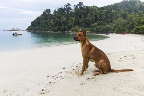 Cão, companheiro de viagens