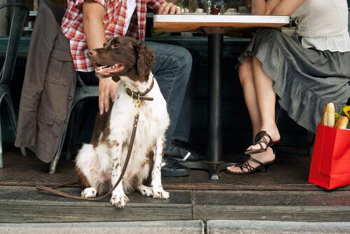 Cachorro em restaurante com seus donos