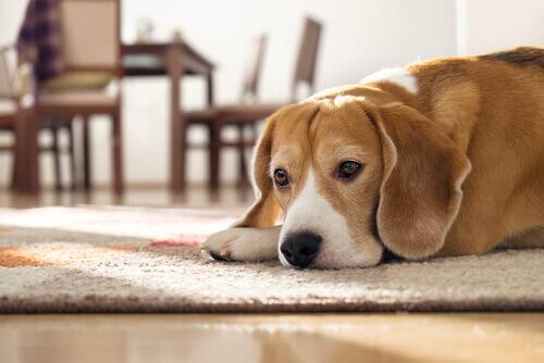 Um cão foi adotado por uma empresa brasileira
