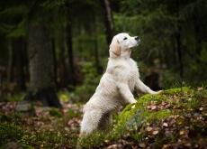 Produtos ecológicos para cachorros
