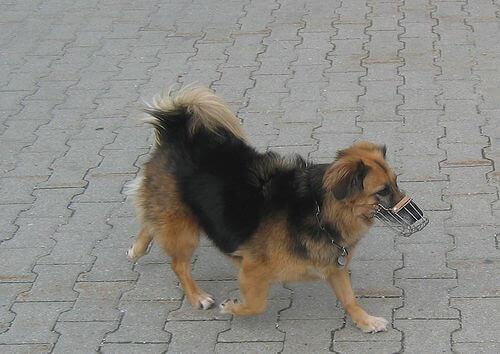 Cachorro passeando com focinheira