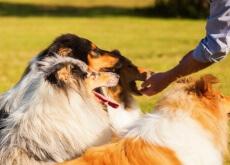 Com que frequência seu cão deve comer?