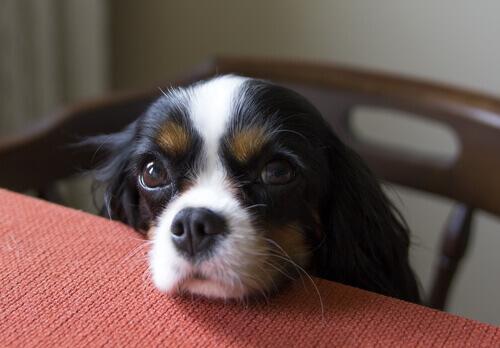 cachorro_pede_comida