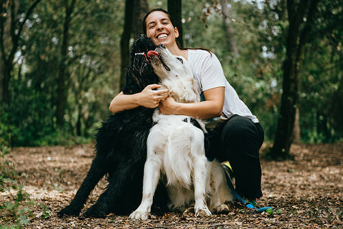 Dona com seus cães