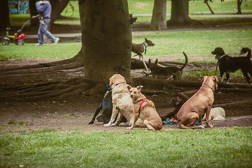 Cães juntos no parque
