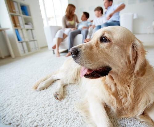 Cão com sua família
