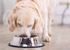 Cão comendo sua ração