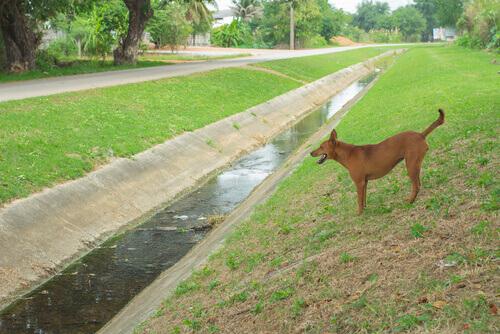 Cão foi atirado em um canal