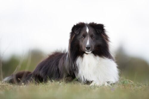 Informe-se sobre a doação de sangue de cães