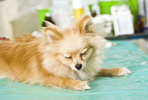 Sintomas de doenças em cães