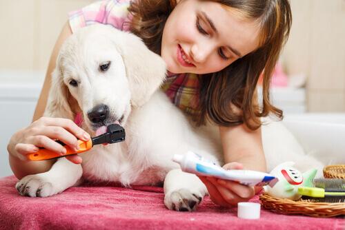 Garota escovando os dentes do filhote
