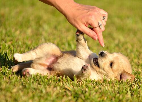 Filhote brincando na grama