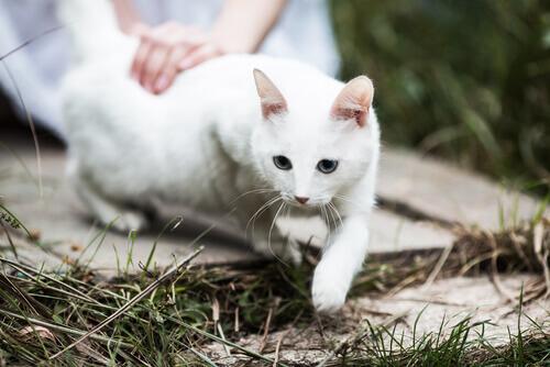 5 razões para amar os gatos