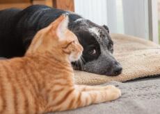 Gatos vivem mais que os cães