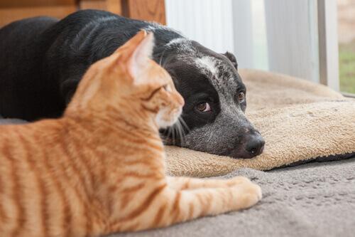 Os gatos vivem mais que os cachorros por serem mais independentes