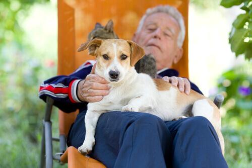 Homem na terceira idade com seu cão