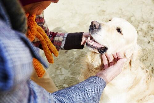 homem fazendo carinho em cachorro