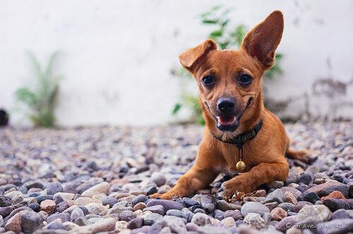 Irresponsabilidades dos donos de cães