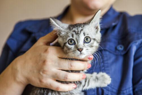 A motorista que salvou um gatinho