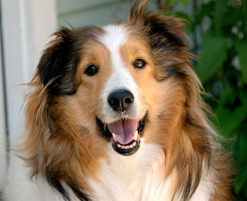 Os cães sabem rir