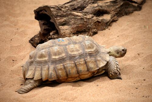 Tartaruga resgatada