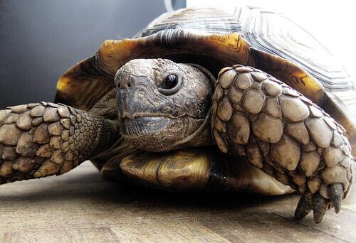 Tartaruga resgatada encontrou refúgio em um lar de idosos