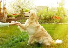 Truques que podem salvar a vida dos cães