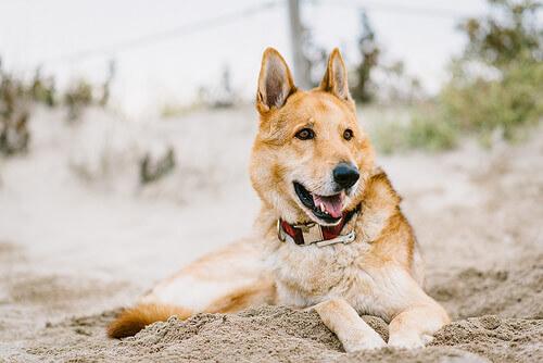 Arthur-o-cão-atleta