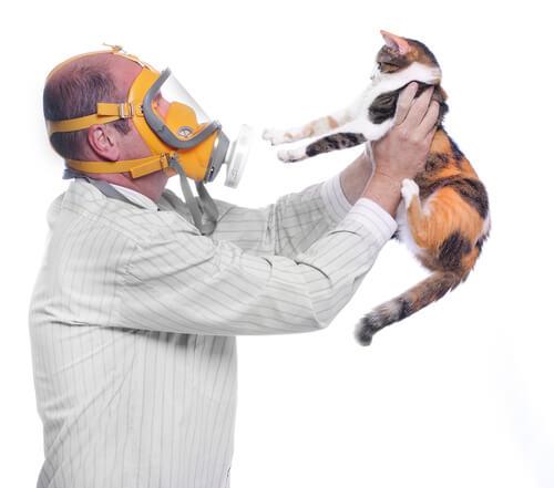 Gato e homem