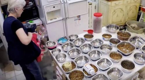 Preparando alimento para cães