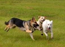 As atividades preferidas dos cães