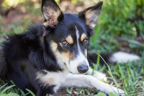 Cão sem nome