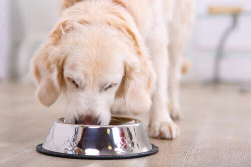 cão-comendo