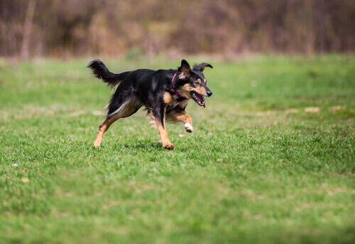 Por que os cães fogem?