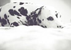 A saúde do seu cão