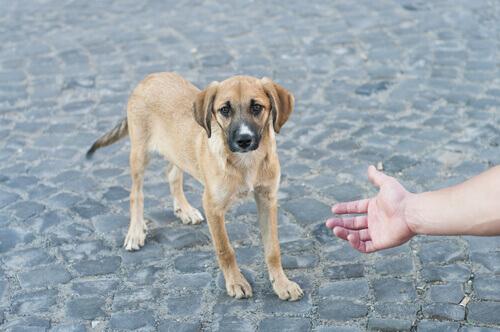Cão de rua