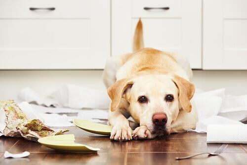 A desobediência nos cães