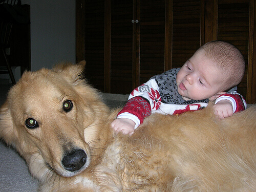 Cão salva bebê