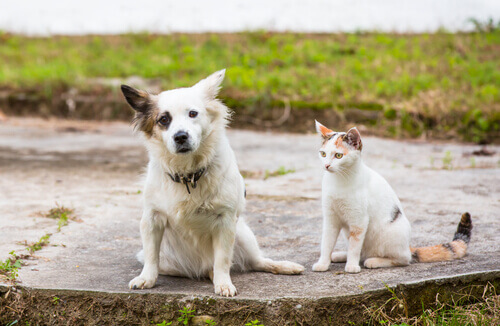 Lei de posse de animais