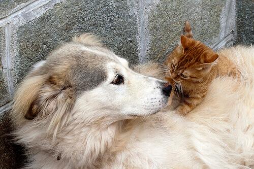 Seu pet precisa de terapia?
