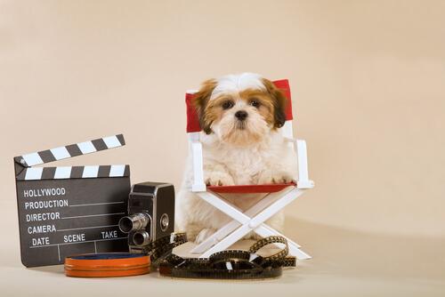 cão-para-television