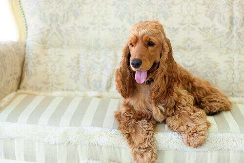 Gravidez canina: minha cadela vai ser mamãe