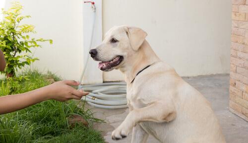 Primeiros socorros para cães