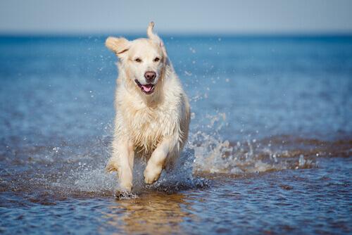 cachorro correndo na água