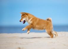 cachorro-dancar