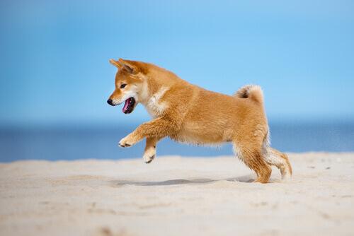 Os cães podem dançar?