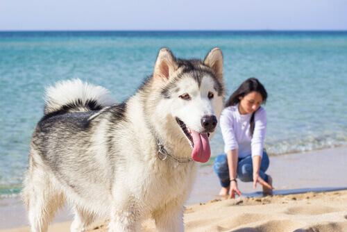 Saia de férias com seu animal de estimação