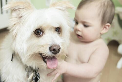 Dê um presente a sua família: inclua um cão na vida de seu bebê