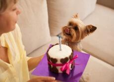 cachorro_comendo_torta_de_maça